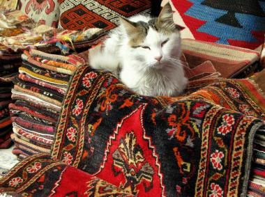 Istanbul Cats | http://isjanbul.tumblr.com