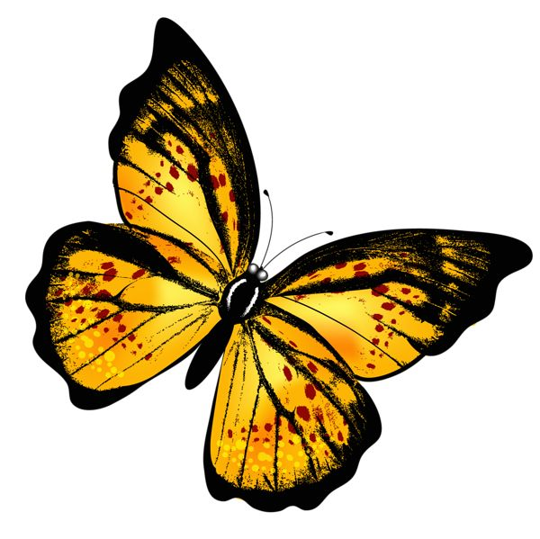 Yellow Transparent Butterfly PNG Clipart Picture