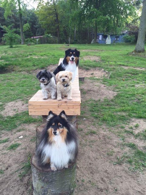 Wellness für dich und deinen Hund: Urlaub auf vier Pfoten an der Mecklenburgischen Seenplatte - 3, 4 oder 6 Tage ab 95 € | Urlaubsheld