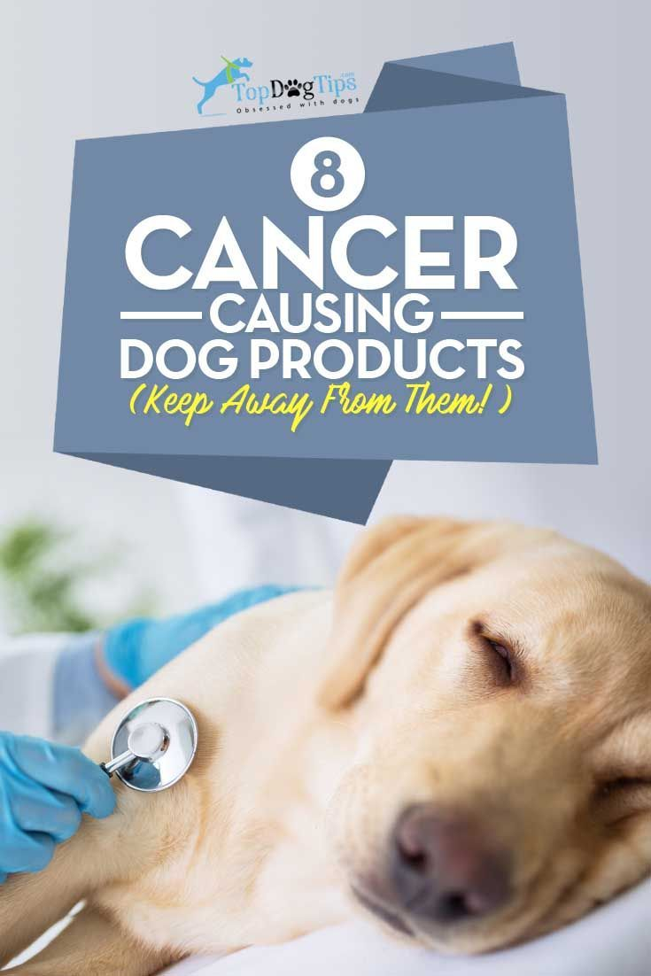 8 Cancer-Causing Dog Products