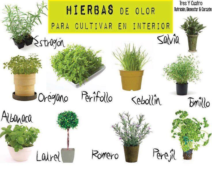 Plantas para cultivar en casa.