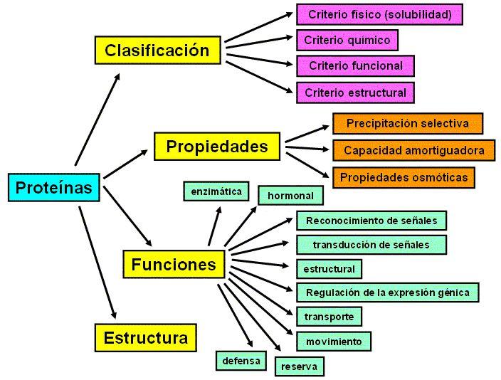 Clasificación, propiedades, funciones y estructura de las proteínas!  #Suprobol #AprendiendoCadaDíaMás