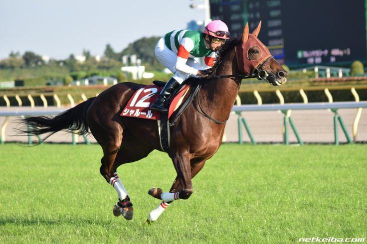 シャルール  みんなの投稿写真 競走馬データ - netkeiba.com