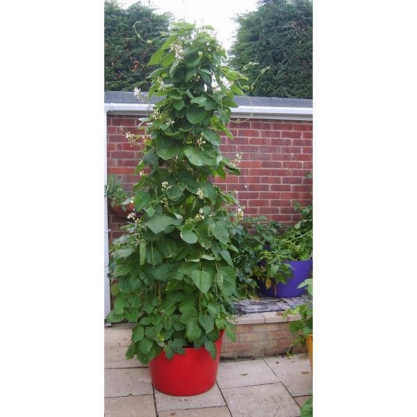 You can even grow Runner Beans in Rainbow Trugs! www.rainbowtrugs.com