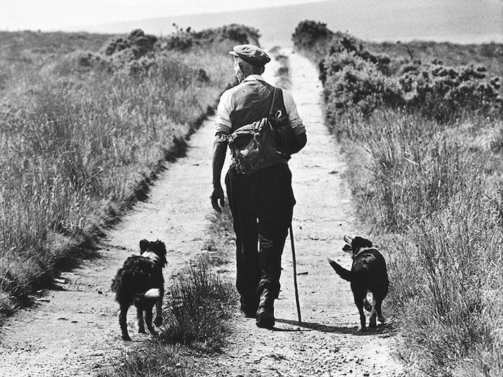a man and his dogsFriends, Favorite Things, Old Dogs, Irish Work, Bill Doyle, Dirt Roads, Beautiful Life, Photography, Things Beautiful