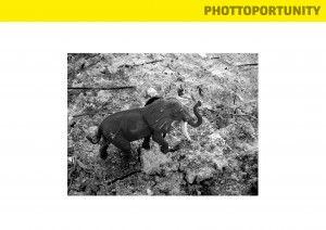 """""""Serie Photopportunity"""" Elefante de Gorongosa que modifica genéticamente sus colmillos; """"Los elefantes nacen sin colmillos por el recuerdo de las matanzas que sufrieron en los tiempos de la guerra en los que los aniquilaron para vender su marfil y comprar armas""""."""