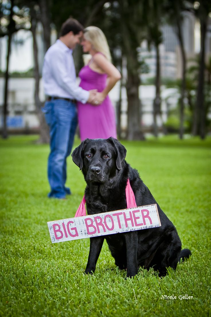 We are so doing this!Tooo Adorable, Pregnancy Announcements, Maternity Pics With Dogs, Cutest Ideas, Pretty Dangly, Cute Ideas, Baby Announcements, Big Brothers, Big Sisters