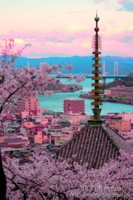 広島・尾道千光寺公園の桜の画像