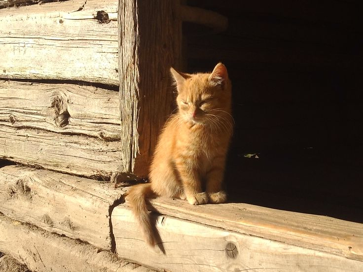 <3 ihana kissa