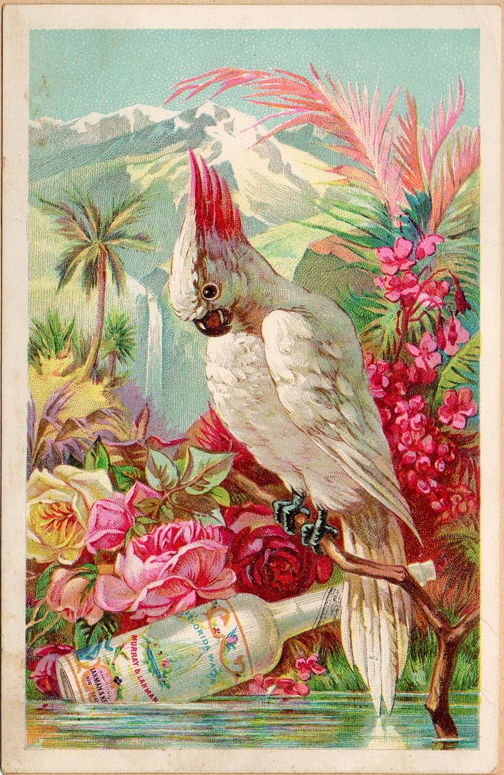 Vintage Victorian Trade Card- Bird and Boose  What a strange moment in time to capture. Nothing like seeing a discarded booze bottle floating by in a pretty tropical environment.