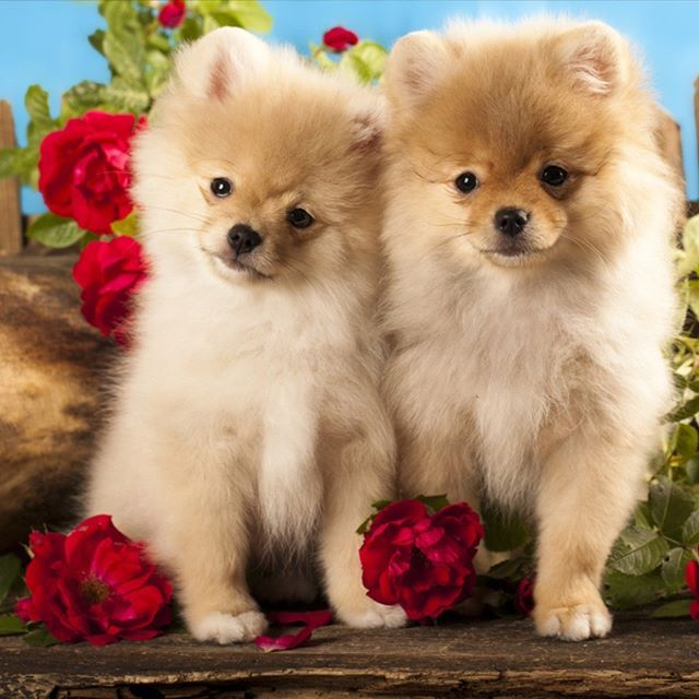Красивые собачки открытки, днем дальнобойщика папе