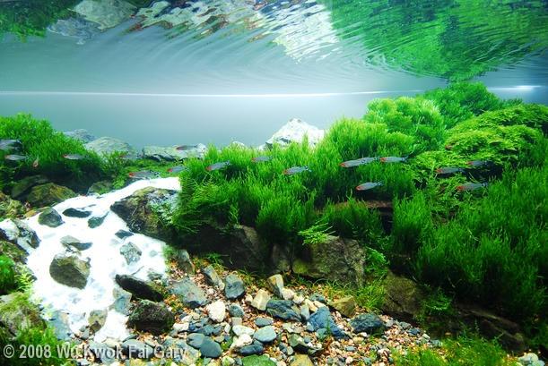 89 best Aquascaping images on Pinterest | Aquarium ideas ...
