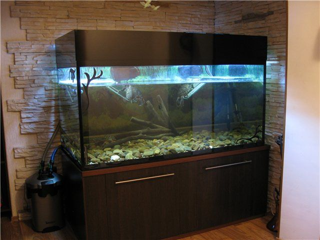 12 best images about our 120 gallon turtle tank on for Turtle fish tank