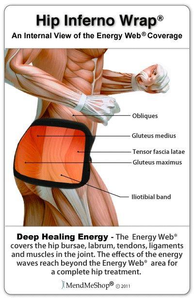 Anatomy of hip area