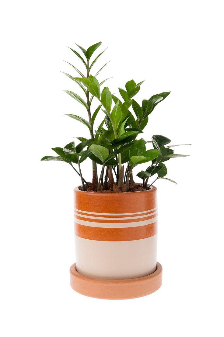 Vaso Cibele - Mude a decor. Invista em verde! As plantas invadiram de vez as revistas e blogs de decoração. Também, não é para menos, além de purificar o ar de ambientes internos, elas trazem conforto e bem estar para dentro de casa. Incorpore já as plantas na sua decoração com vasos de barro pintados no melhor estilo rústico-chique.