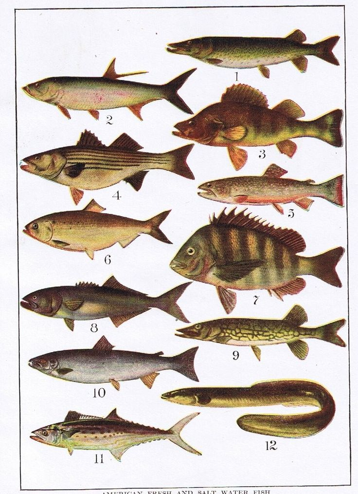 27 best images about ocean everything on pinterest paper for Saltwater fish representative species