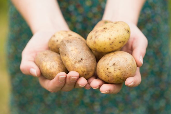 Zemiaková šťava má mnoho benefitov, najmä však pomáha žalúdku. – obrázky | Vyšetrenie.sk