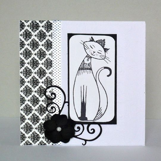 card - cat - black and white