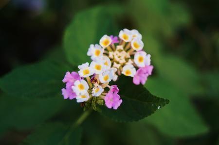 Small beautiful flowers Photo by Akhilesh Raja — National Geographic Your Shot