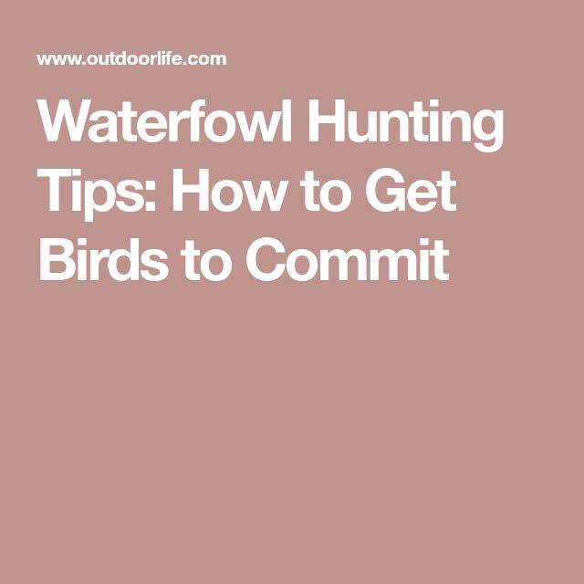 Waterfowl Hunting Tips: How to Get Birds to Commit #waterfowlhuntingtips