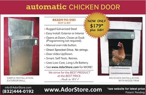 AdorStore Automatic Chicken Door: Doors Open,  Internet Site, Adorstor Automat, Doors Options, Chicken Coops, Automatic Chicken, Automatic Doors, Chicken Doors, Coops Doors