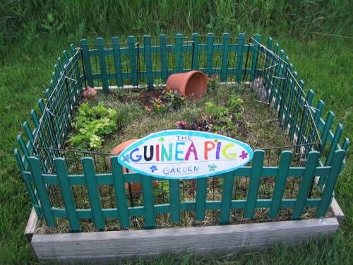 A guinea pig garden-cute idea: Bring your piggies out and let them run around and eat some grass while you watch over them.