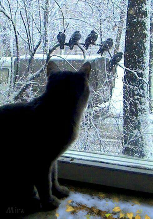 ❤️ BℓαᏣƙ =^.^= CÅt§ in The Window ♥