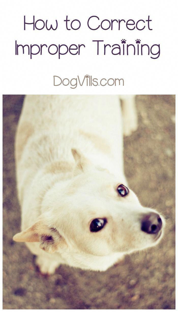 Training Your Dog How To Correct Improper Training Training
