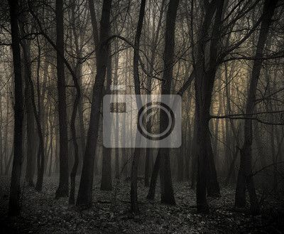 Fototapete Der dunkle Wald