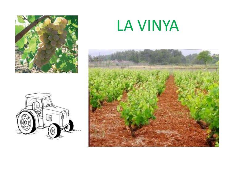 Tema 1 medi la vinya by jnavarr9 via slideshare