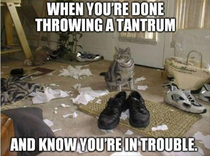 529 best cats images on pinterest funny animals cats humor and funny animal pictures of the day 24 pics sciox Image collections