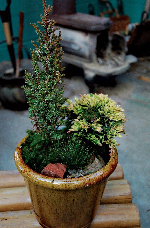 Low Maintenance Porch Plants