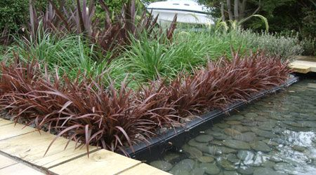 SWEET MIST® is an ultra compact Phormium with bronze foliage, bordered together with green Phormium tenax, great colour combo!