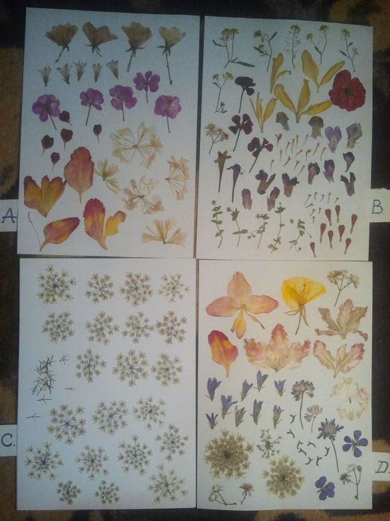 Choose your pressed flowers assortment for your by DraculasGarden