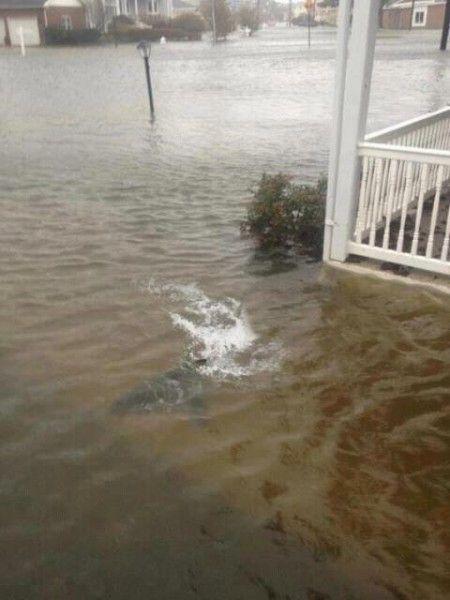Hurricane Sandy - Shark In New Jersey