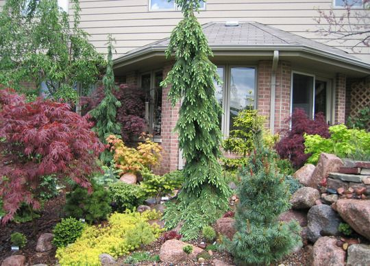 Conifer Garden Ideas conifer garden evergreen garden ideas pinterest gardens and shrub Conifer Garden Conifer Garden Grows On You