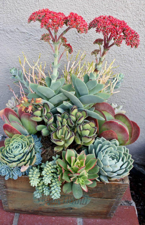 Succulent selection