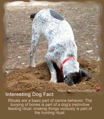 61 Best Images About Animal Facts On Pinterest