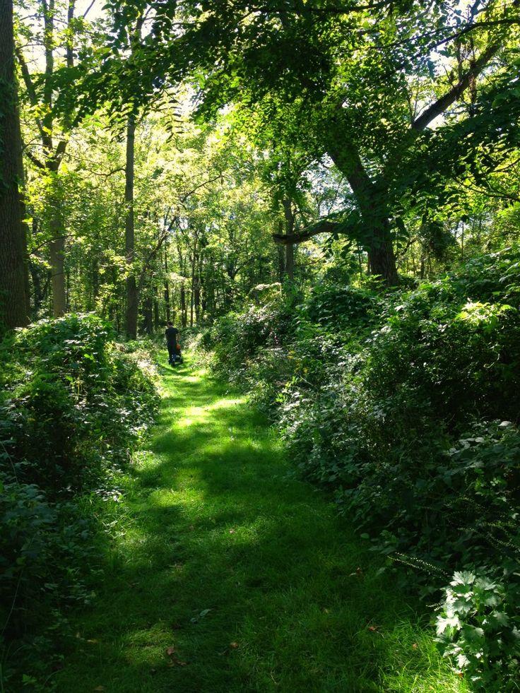 Lush Green Forest Hamilton, Ontario