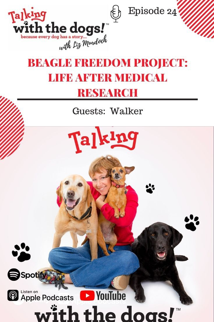 Beagle Freedom Project Life After Medical Research Beagle Freedom Project Medical Podcasts