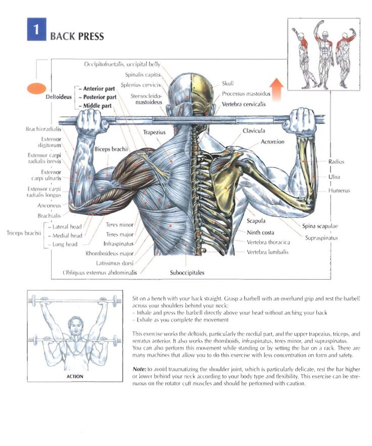 17 best Training Anatomy (Shoulders) images on Pinterest | Gym ...