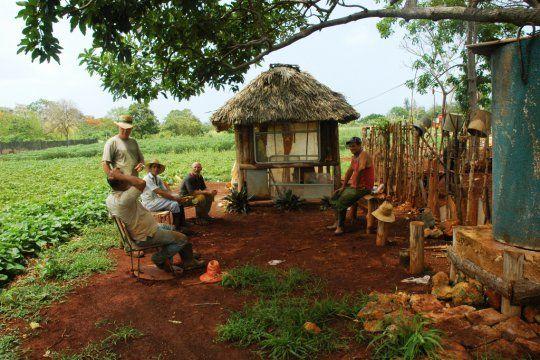 Comment les Cubains ont converti leur île à l'agriculture biologique  /  dont 400 000 exploitations agricoles urbaines... *****