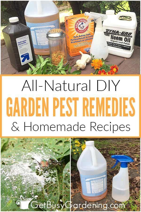 d6ab71d80447f2fd40a13eed7cfe6030 - Diy Organic Pest Control For Gardens
