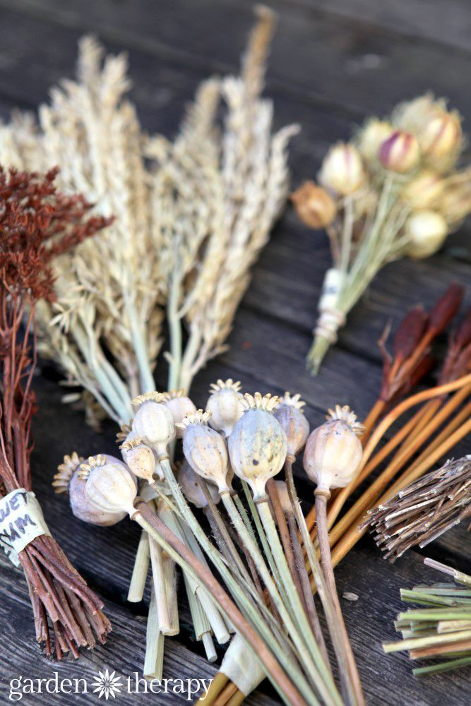 How to dry flowers and preserving flowers, leaves, stems, and pods from the garden to give you a treasure trove of beautiful dried plants to craft with.