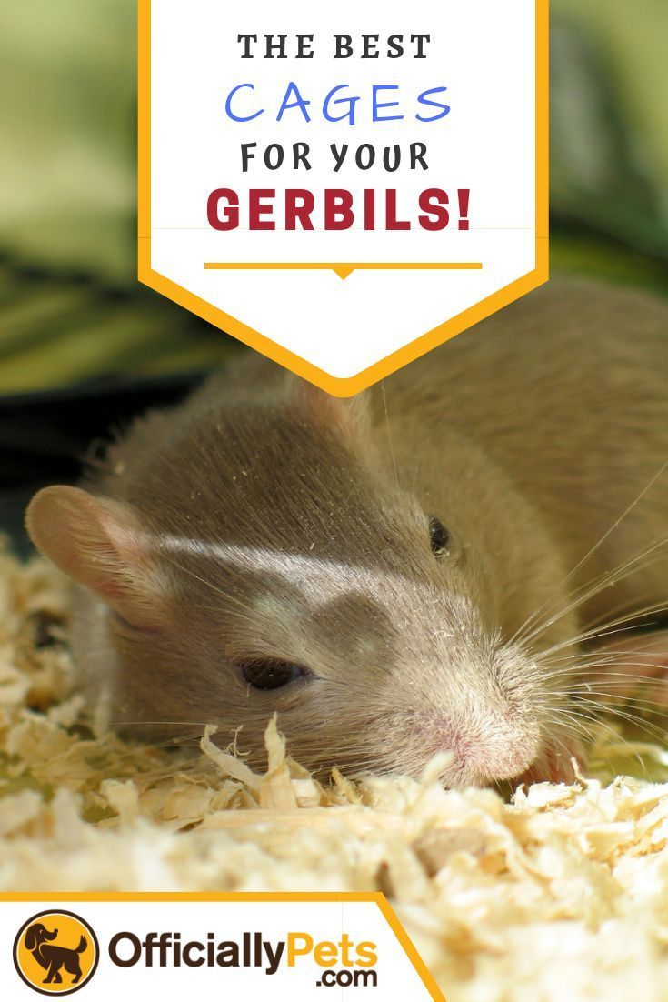 7 Best Cages For Gerbils Which Type Of Cage Should You Get 2019 In 2020 Gerbil Gerbil Cages Best Pet Dogs