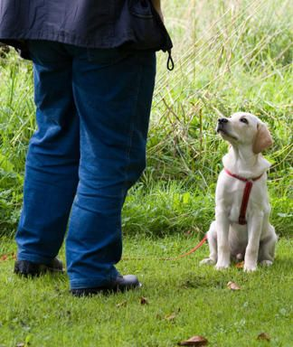 How to House Train a Puppy, dog stop peeing in house, dog stop going bathroom in house.     There are the 4 Steps to House Training a Puppy    dog training, dog training tips, puppy training, new puppy tips, puppy tips, dogs, puppies