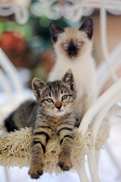pretty kittys