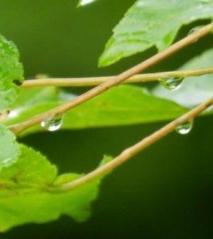 DIY Rainwater Catchment System