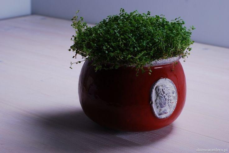 Gliniana doniczka wykończona czerwonym szkliwem i pięknym zdobieniem po bokach. Kolor dobrze kontrastuje z zieloną rośliną. Pomysł na prezent dla miłośników kwiatów i niebanalnych dodatków do wnętrz.