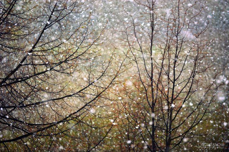 Schnee by fadinizami on DeviantArt